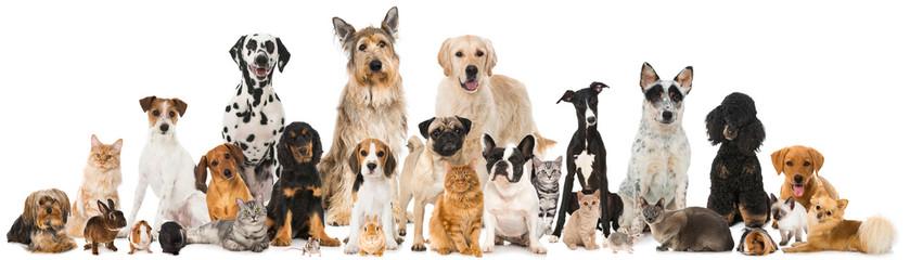 Médicaments vétérinaires près de Belfort